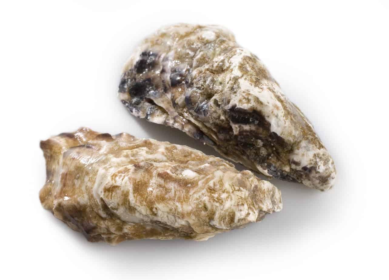 Französische Creuse Austern